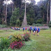 Giant trees on the Kokoda Trail