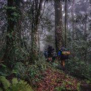 walking to Templetons crossing Kokoda